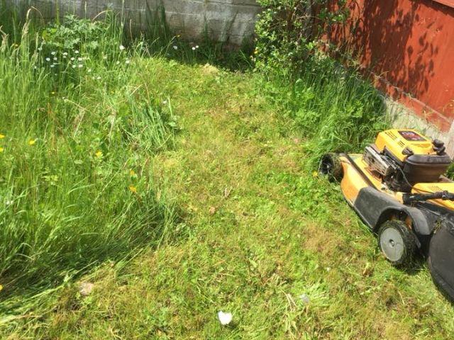 Garden Maintenance Cork Grass Cutting