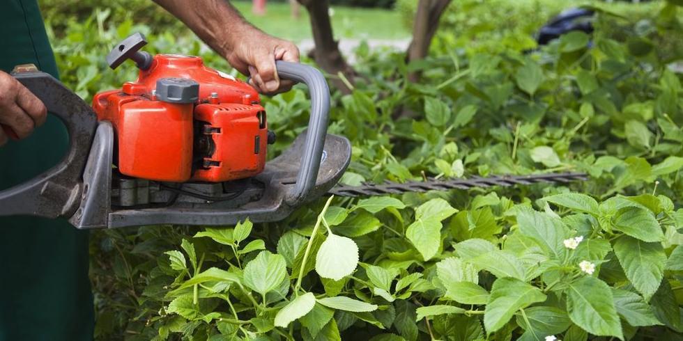 Hedge Trimming Service - Advanced Gardenign Service Wexford Waterford Kilkenny