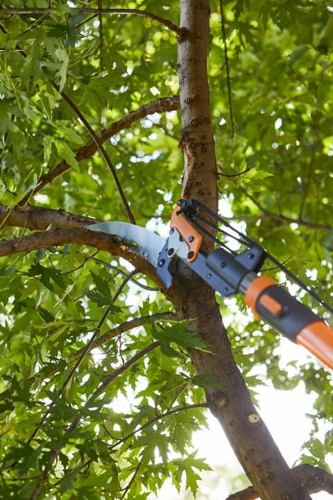 Tree Pruning, Topping and Removal - Advanced Gardening Service Wexford